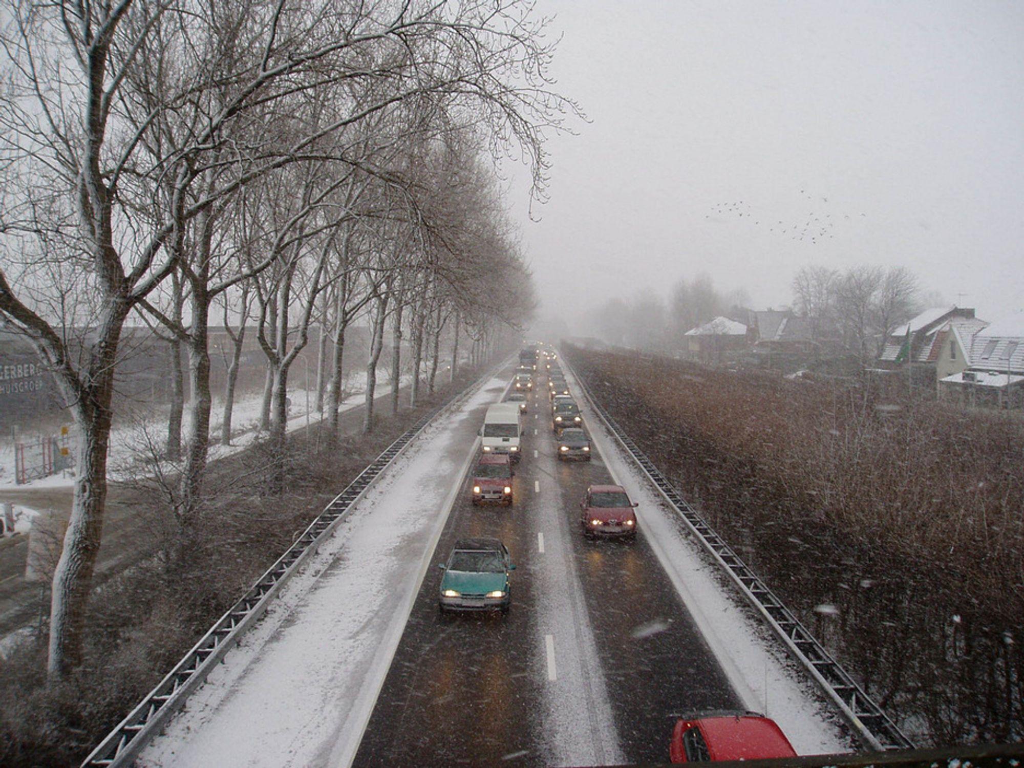 Veisalt er svært skadelig for vegetasjonen langs veiene, viser forskning.