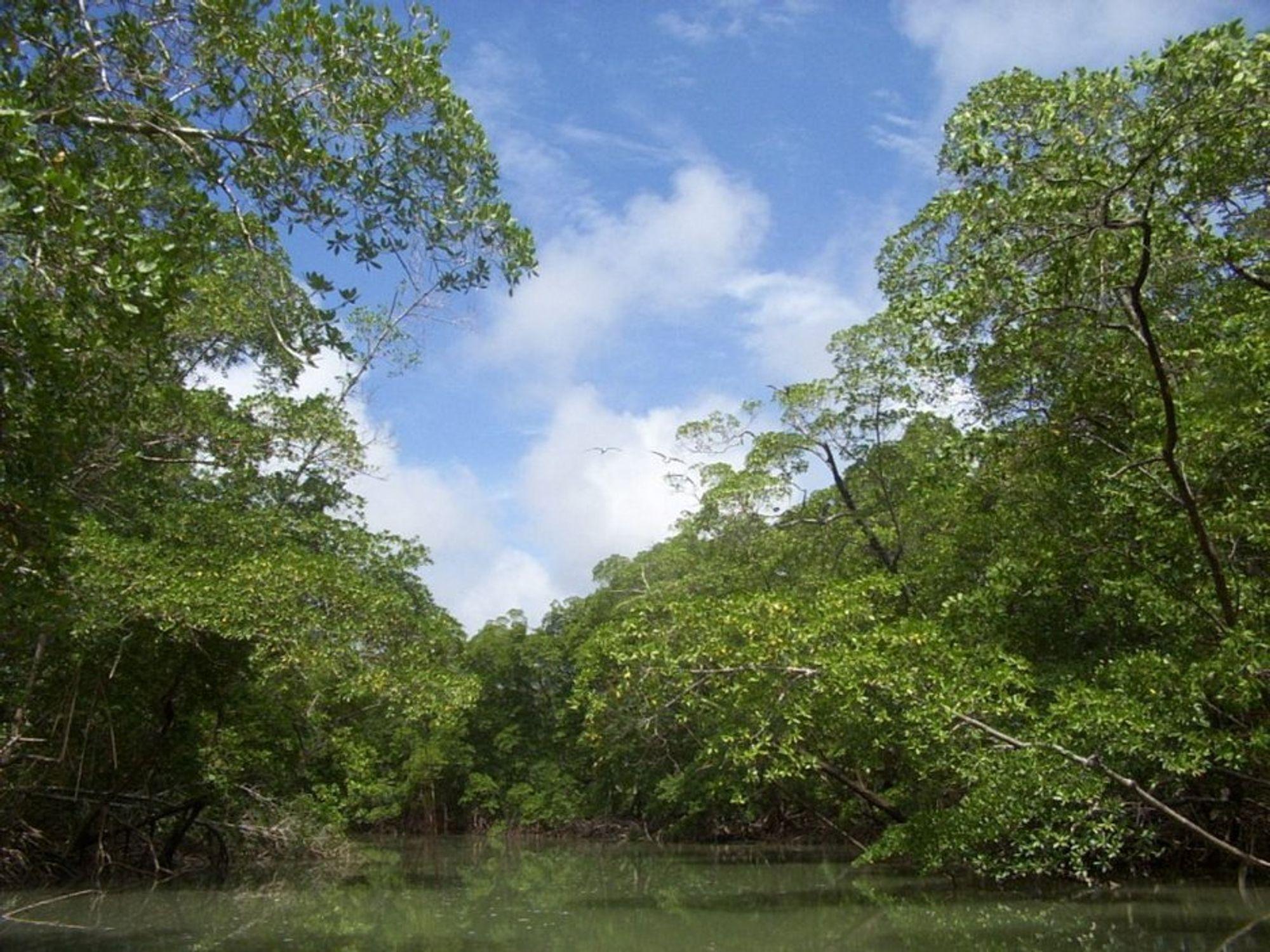 Brasilianske myndigheter har sagt ja til bygging av to gigantiske vannkraftverk og tilhørende demninger i Amazonas.