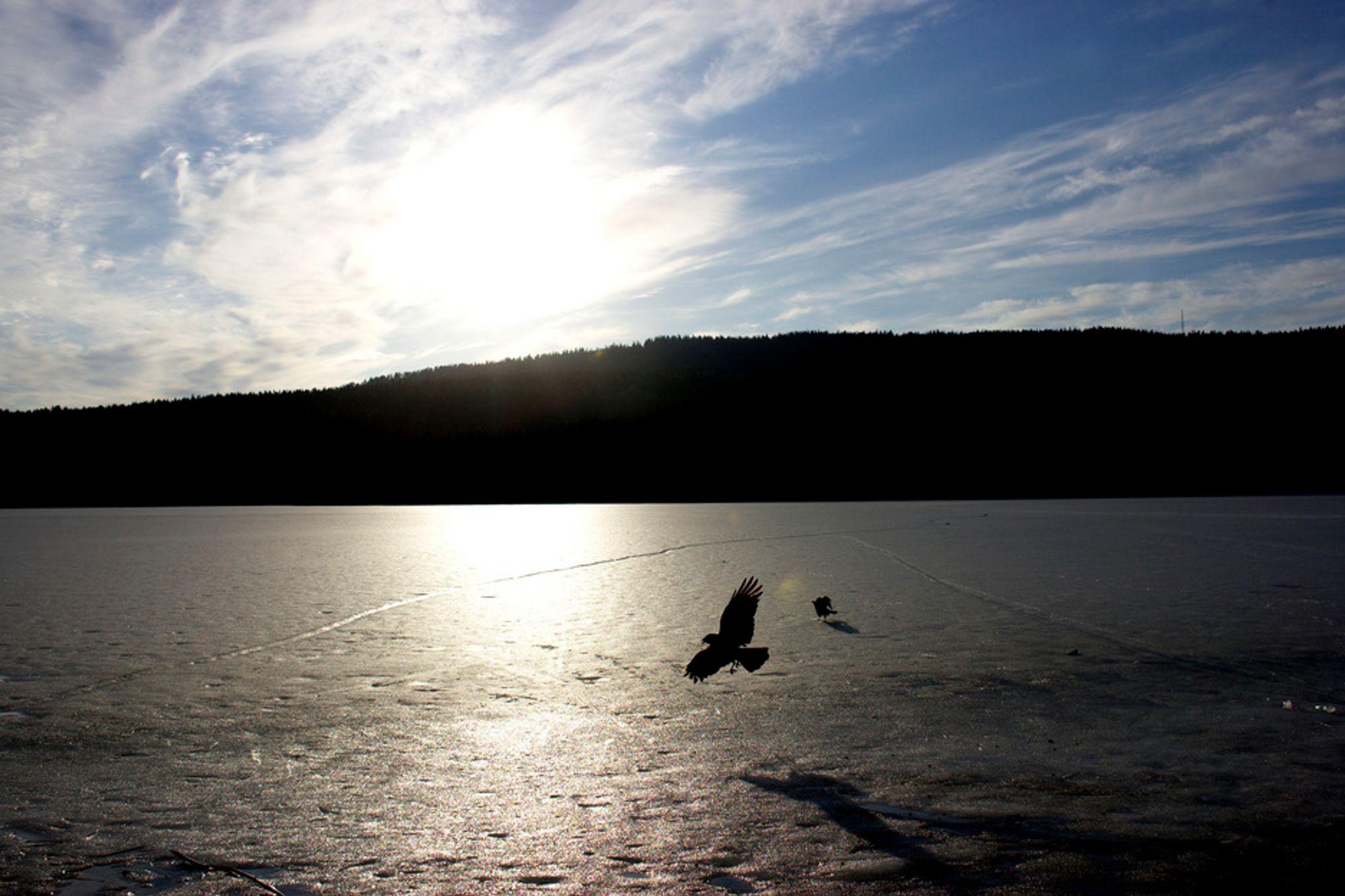 Maridalsvannet, Oslos viktigste drikkevannskilde.