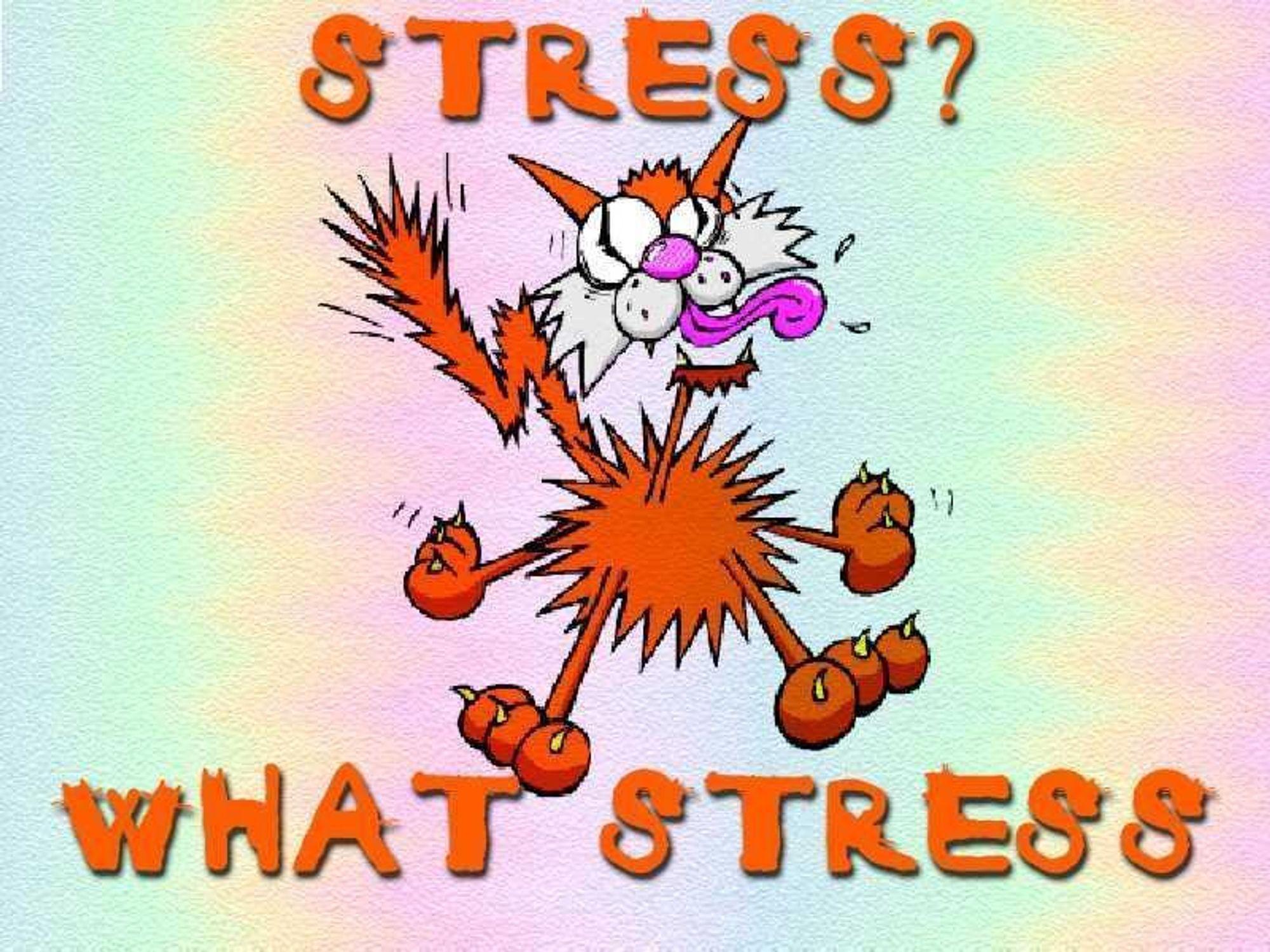 Frihet på jobben skaper stress