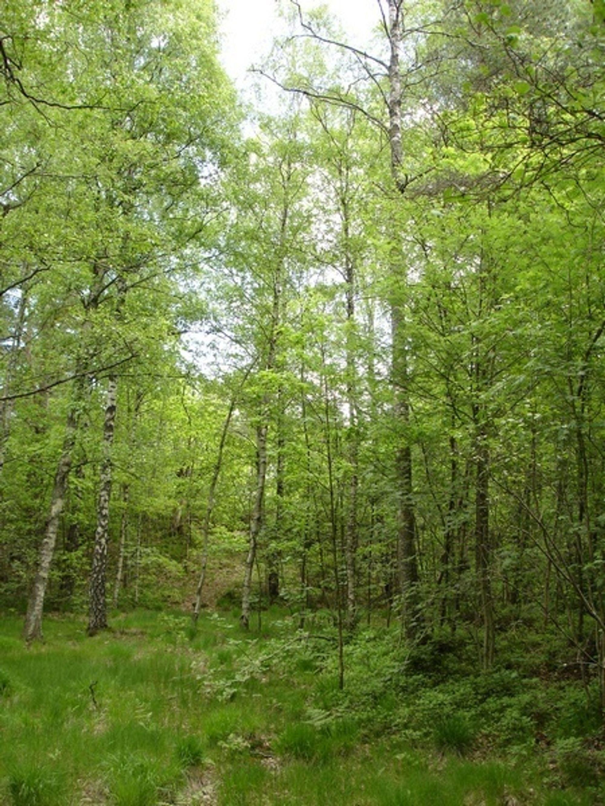 Naturen makter mindre CO2