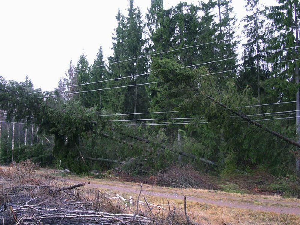 NEDE: Stormens herjinger i Syd-Sverige har lagt store deler av strømforsyningen i ruiner. Kunder som befinner seg utenfor tettsteder må vente opptil tre uker før de får strømmen tilbake. FOTO: SYDKRAFT