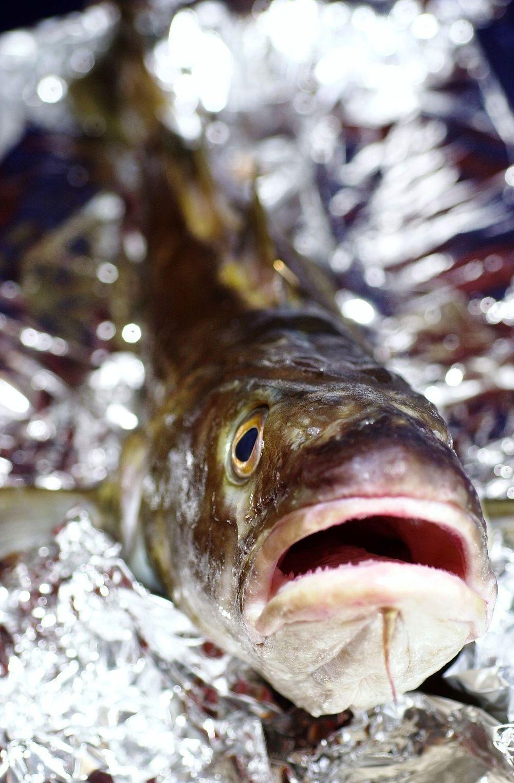 SMAKER FISK: Ved å gasspakke fisken kan holdbarheten forlenges og forbruket av fisk økes betraktelig.  FOTO: TU-arkiv