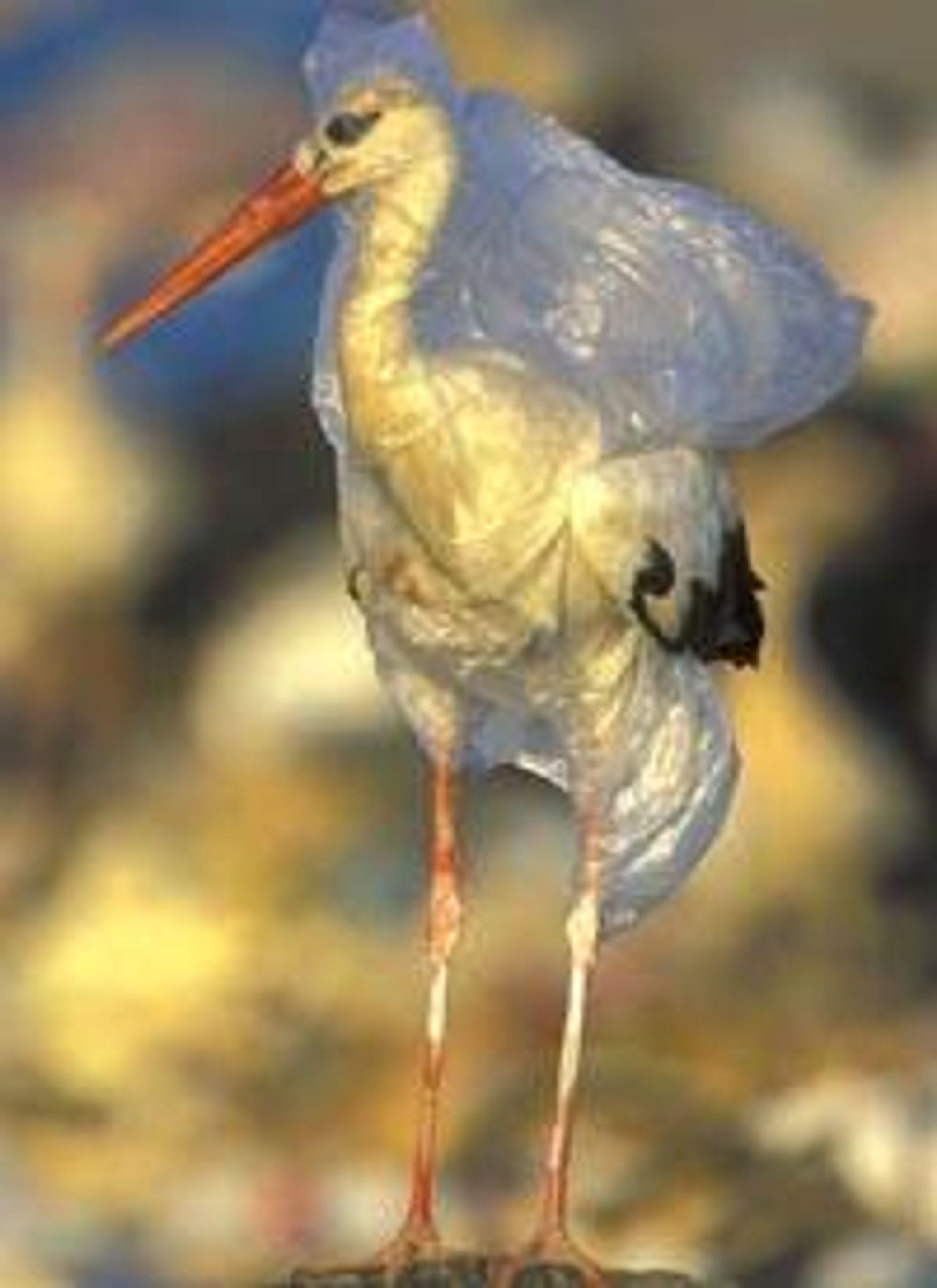 HAVNER I NATUREN: Bare en liten promille av alle plast som produseres materialgjenvinnes.