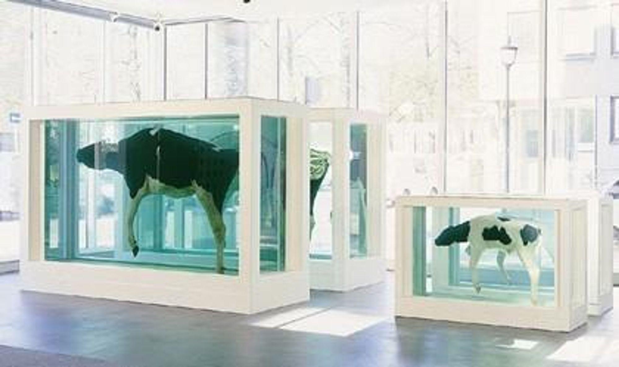 RÅTNER?: Vil et av de mest kjente kunstverkene til Astrup Fearnley-museet råtne fordi det er lagt i formaldehydoppløsning? Mother and Child, Divided ble kjøpt i 1996. FOTO: ASTRUP FEARNLEY MUSEET FOR MODERNE KUNST