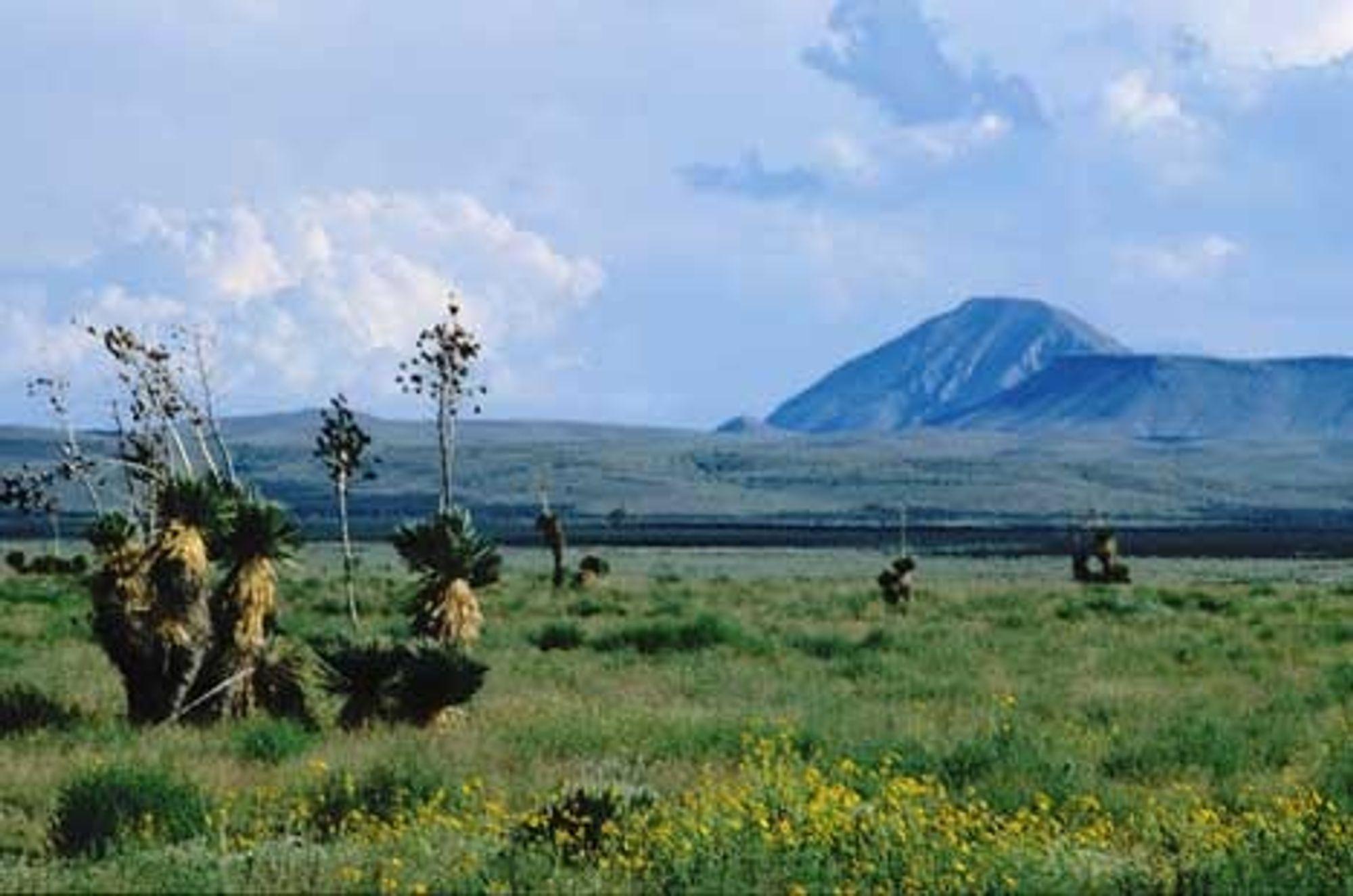 SÅRBART: Ørkenlandskapet i Otera Mesa skal nå åpnes for oljeboring til tross for at det er et unik og sårbart område både med hensyn til flora, fauna og grunnvannsforekomster. Her et bilde tatt etter et kraftig regnskyll som i en kort periode får ørkenen til å blomstre. FOTO: Stephen Capra, New Mexico Wilderness Alliance