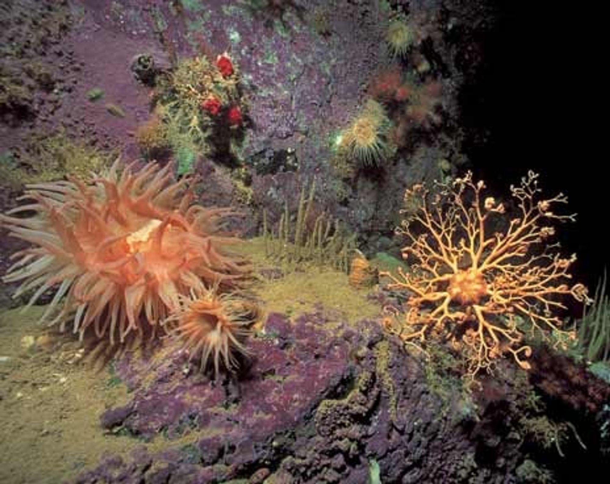 Bioteknologiselskaper ser store muligheter i sjøen og på havets bunn. Her kan det ligge store medisinskatter.