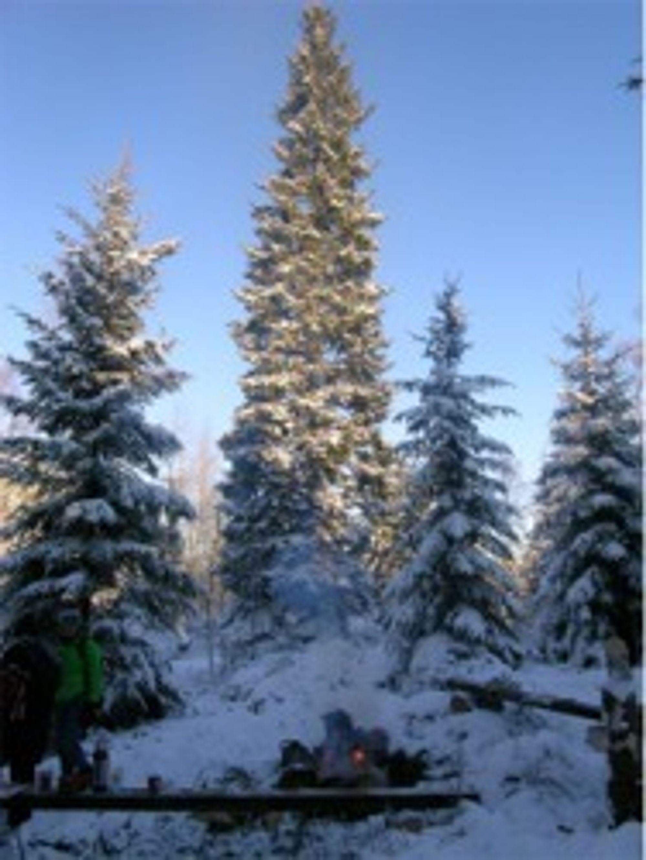 Det norske treet i London opplyses ved hjelp av brenselcelle og blir dermed grønt i alle henseende.