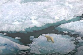 En isbjørn på et isflak på Svalbard. Et oljeutslipp i is er vanskelig å håndtere og kan true dyrelivet.