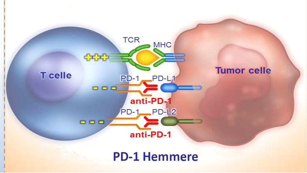Kreftlegende: Immunterapi vil dominere kreftbehandlingen om