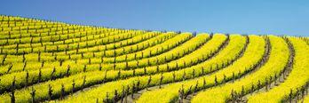 Smak viner fra Californias pinot noir-paradis