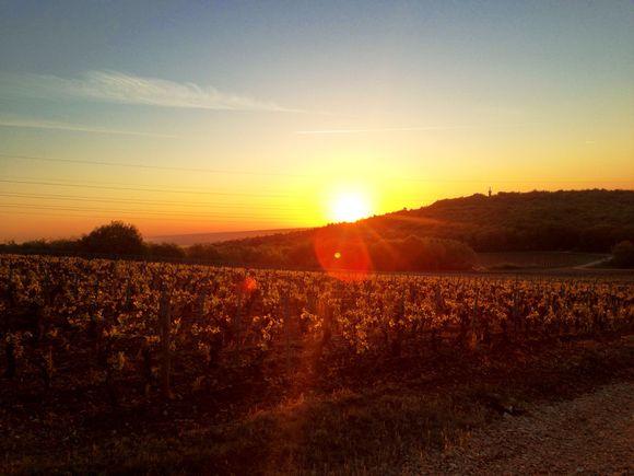 Fra Framboisiere-vinmarken.
