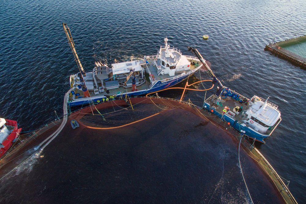 Eva Elisabeth kan ligge på dynamisk posisjonering (DP) og suge opp 150 tonn laks i timen som fordeles på to Thermolicer-anlegg. I løpet av 90 sekunder i 30 grader, dør lakeslusen og faller av.