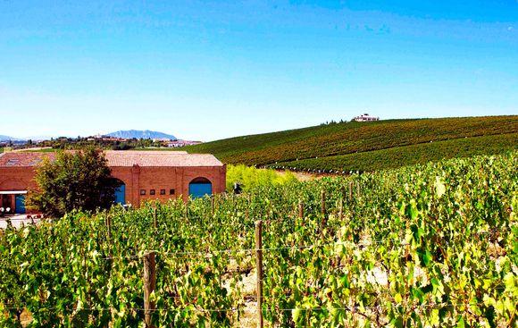 Fra vinmarkene som tilhører kollektivet.