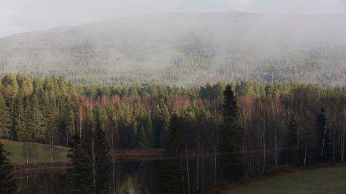 Norsk skog kunne hindret palmeoljeproblemet i drivstoff