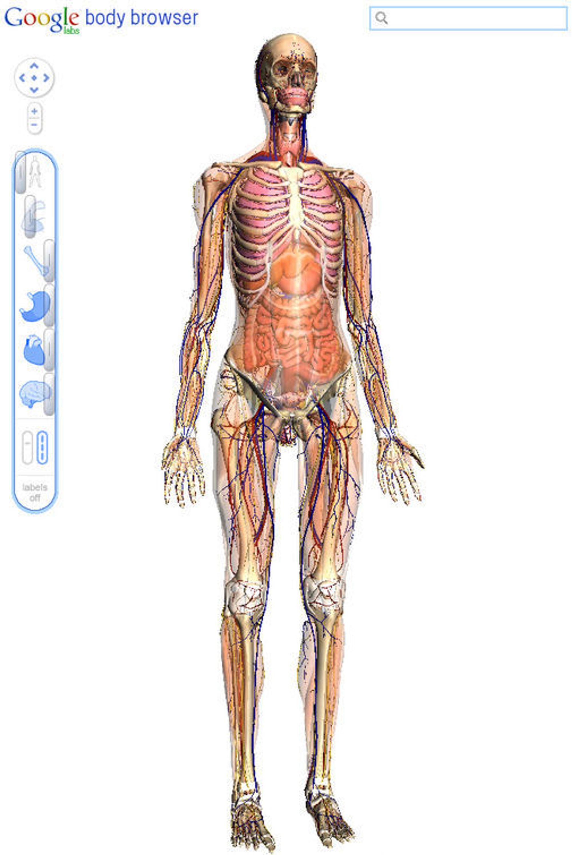 Googles Body Browser viser menneskekroppens anatomi i 3D og gjennom flere lag.