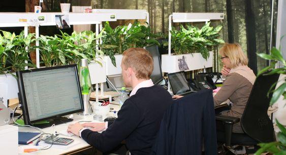 Naturlig lys og planter gjør sitt til at de ansatte føler seg ekstra opplagte.
