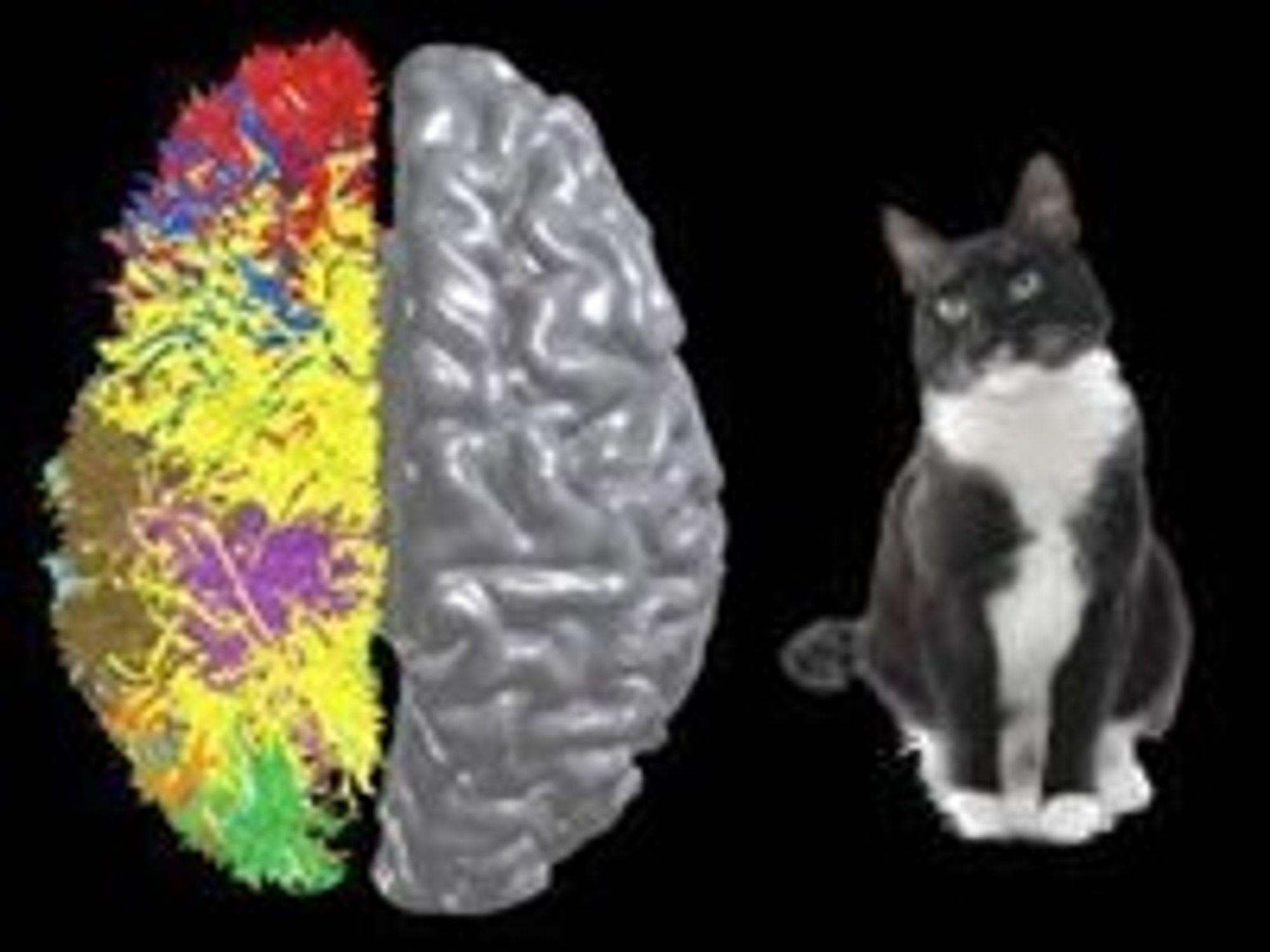 Bildet symboliserer de to siste nyvinningene innen kognitiv databehandling: BlueMatter-algoritmen og hjernebarksimulering i katteskala.