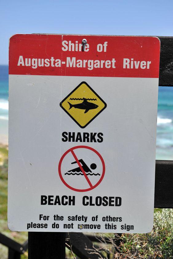 Senest i slutten av november ble en mann drept av hai i et surfeområde i Australia.