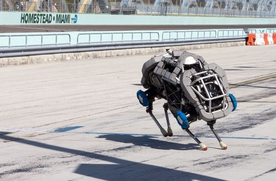 WildCat er en ny versjon av Cheetah-roboten til Boston Dynamics.