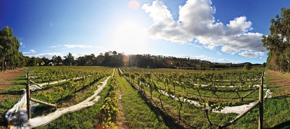 Arthurs Creek-vinmarken vest i Yarra en gammel elvebunn med kjølig beliggenhet og gir druer til en av Innocent Bystanders Giant Steps-chardonnayer.