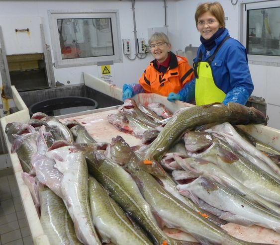 Forskerne med litt av dagens fangst. Nå skal kvaliteten på fiskekjøttet under lupen. Prosjektleder Hanne Digre til høyre og ingeniør Marte Schei til venstre. Foto: SINTEF.