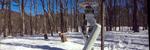 Les Dette er «Schaft», Googles nye tobeinte robot