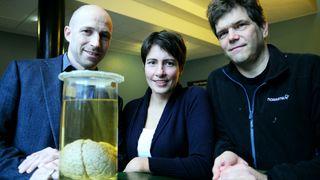 Nå er fysikere blitt hjerneforskere: Modellerer hjernen som en elektrokjemisk maskin