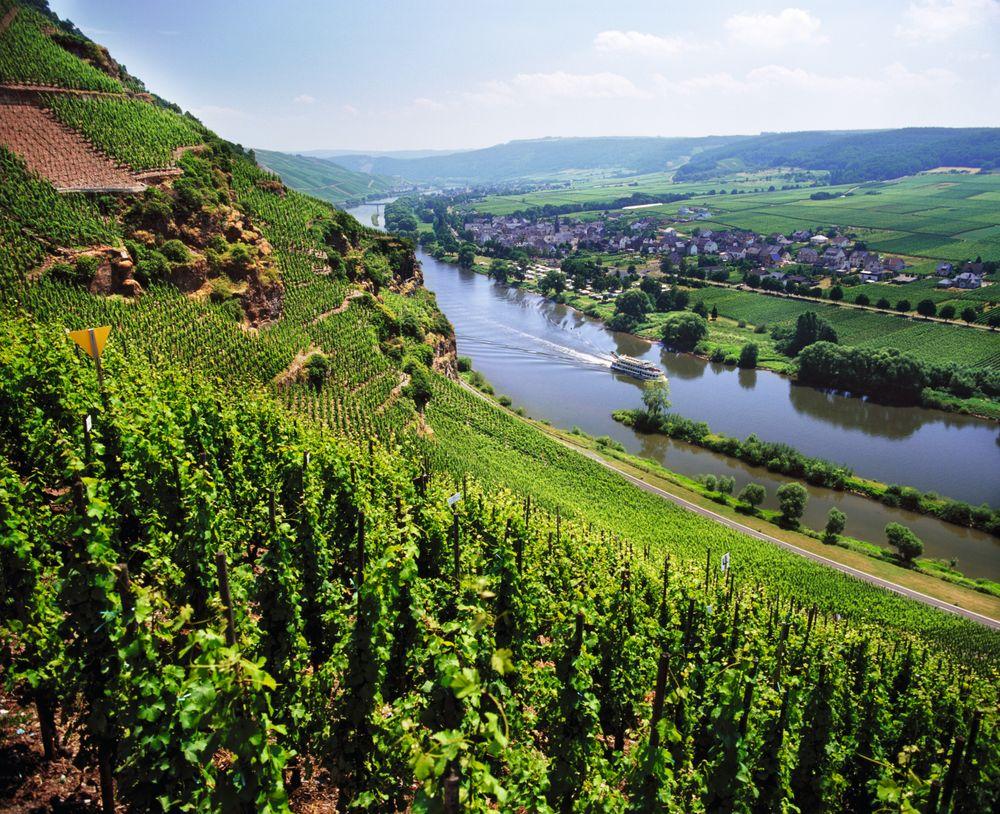 Utsikt fra Ürziger Würzgarten mot Erden.