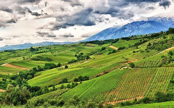 Fra Tenuta Ulisses vinmarker.