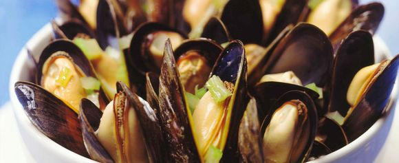 Moules Dark Bayer