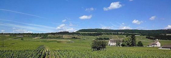 Utsikt fra vinkjelleren mot Puligny-åsen.