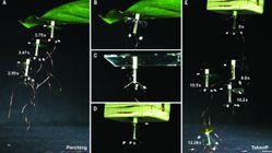 Disse små, flyvende robotene klebrer seg fast til objekter ved hjelp av statisk elektrisitet