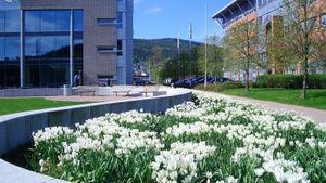 WSP etablerer kontor i Drammen