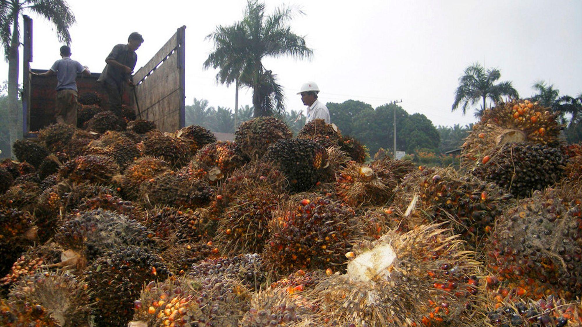 TU LIVE: Nesten halvparten av all palmeolje-bruk i EU er drivstoff
