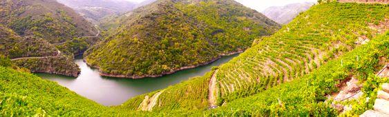 Fra Carballocovo hvor Algueira har sine vinmarker som stuper ned mot elven Sil.