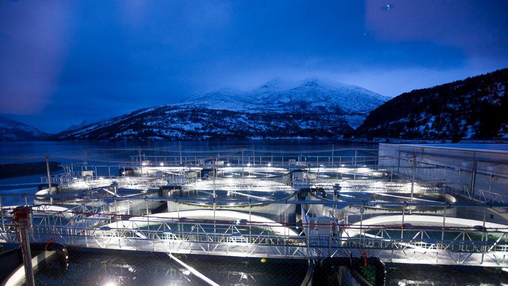 Fra Smolten AS' settefiskanlegg i Mørsvikbotn i Nordland.