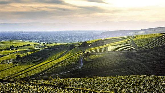Fra Gleichensteins vinmarker.