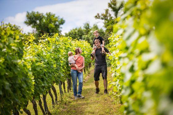 Neste generasjon Weinmann er under opplæring. Theo (29) er eldst av tre brødre som driver vingården sammen med foreldrene.