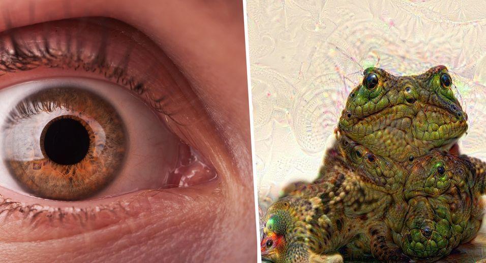 Googles lærende datamaskin skal gjenkjenne tegn på tidlig øyesykdom. Men for deg og meg er den kanskje mest kjent som bildenettstedet Deep Dream. Til høyre et bilde av en padde som har fått hilse på den helsprø bildebehandlingen.