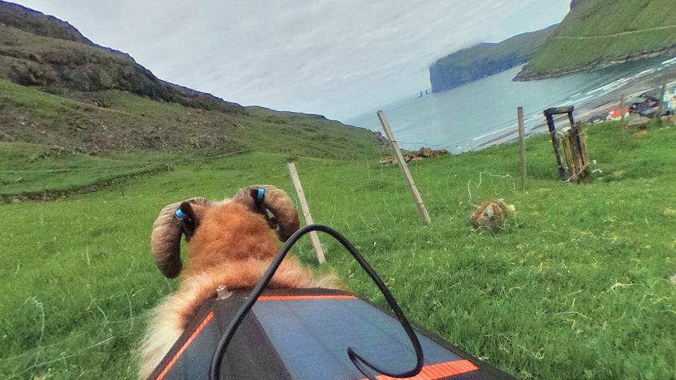 Slik ser Færøyene ut fra ryggen på en av de firbente krabatene.