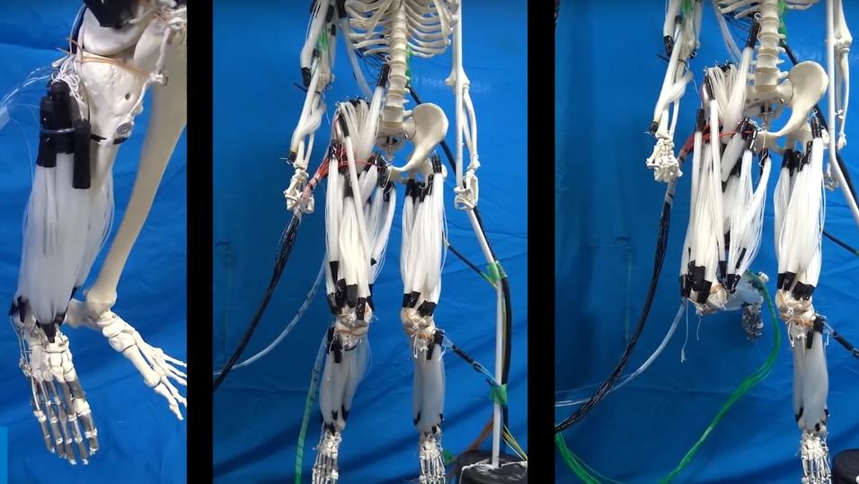 Roboten bruker tråder som tilsvarer muskelceller.