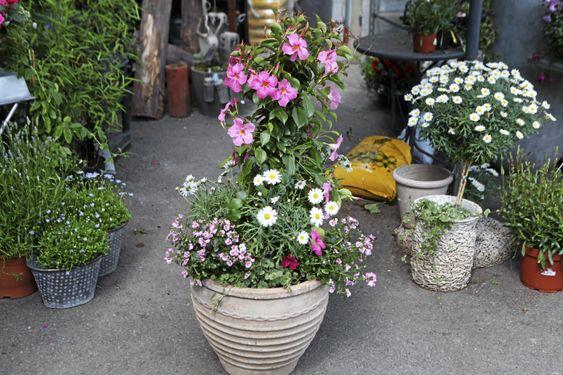 TENK STORT: Velger du en stor krukke som denne med mange planter i kan du spare plass, men likevel få full blomstereffekt.