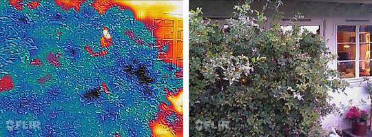 Bak denne busken står det et menneske. Men ingen av Cat S60s to kamera er i stand til å se forbi krattet foran. Så lenge varmekilden er skjermet blir den ikke synlig her.