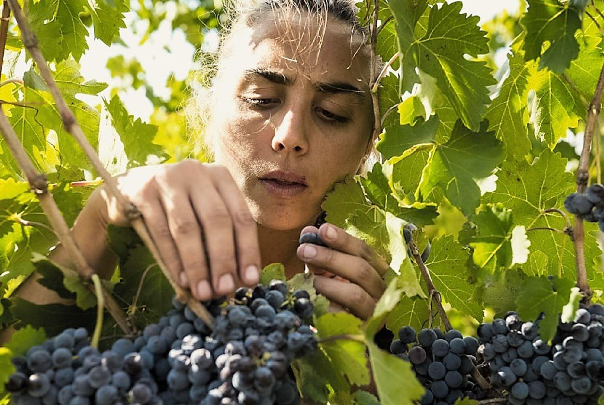 Arianna Occhipinti har sjarmert en hel vinverden med sine viner.