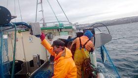 Første sei på dekk i fjor om bord i el-sjarken Karoline.