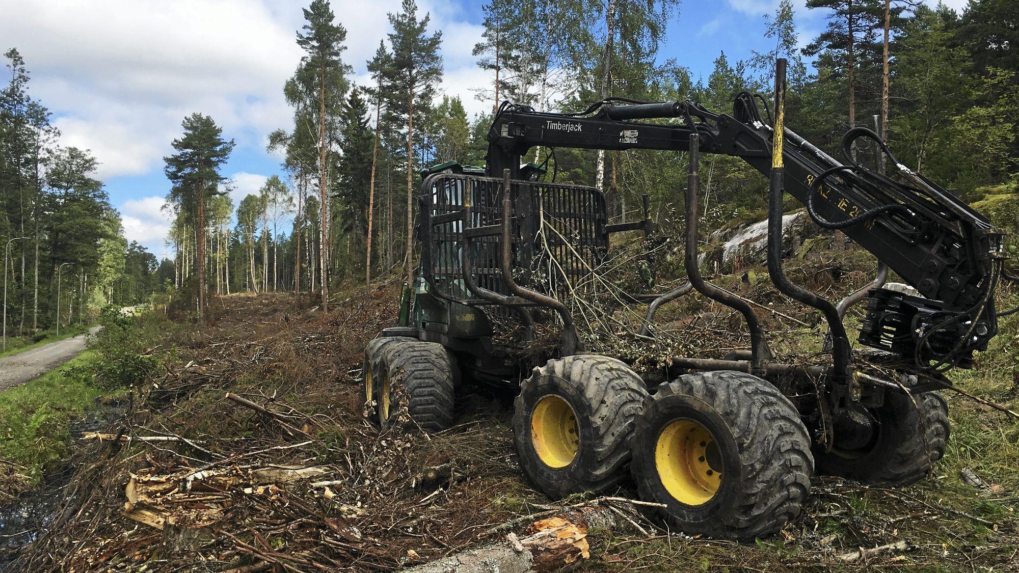 SLIK SER DET UT I DAG: Skogen er ikke akkurat et fruktfat etter skogsmaskinenes arbeide. Beklageligvis blir det liggende akkurat som det ligger i dag fremover også.