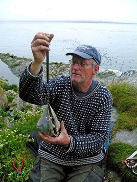 Robert Barrett veier lomviunger på Hornøya i juli 2008.