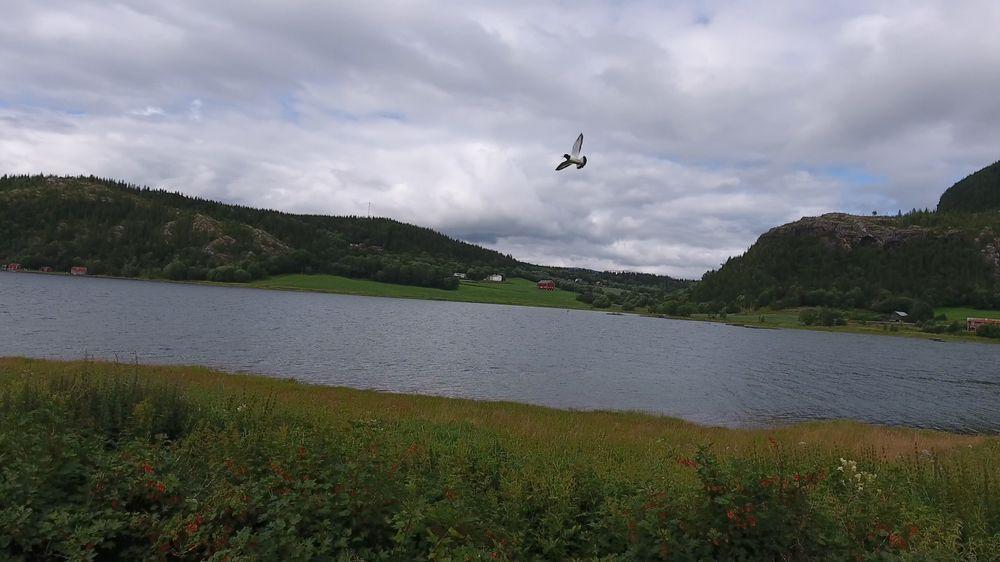 Hadde fuglen fløyet inn i dronen? Neppe. Hadde vi tenkt å finne det ut med sikkerhet? Nope!