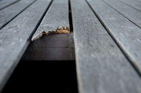 Flere bord på Jåttå videregående har knukket rett av på grunn av råte.